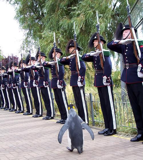 nils-olav-penguin.jpg
