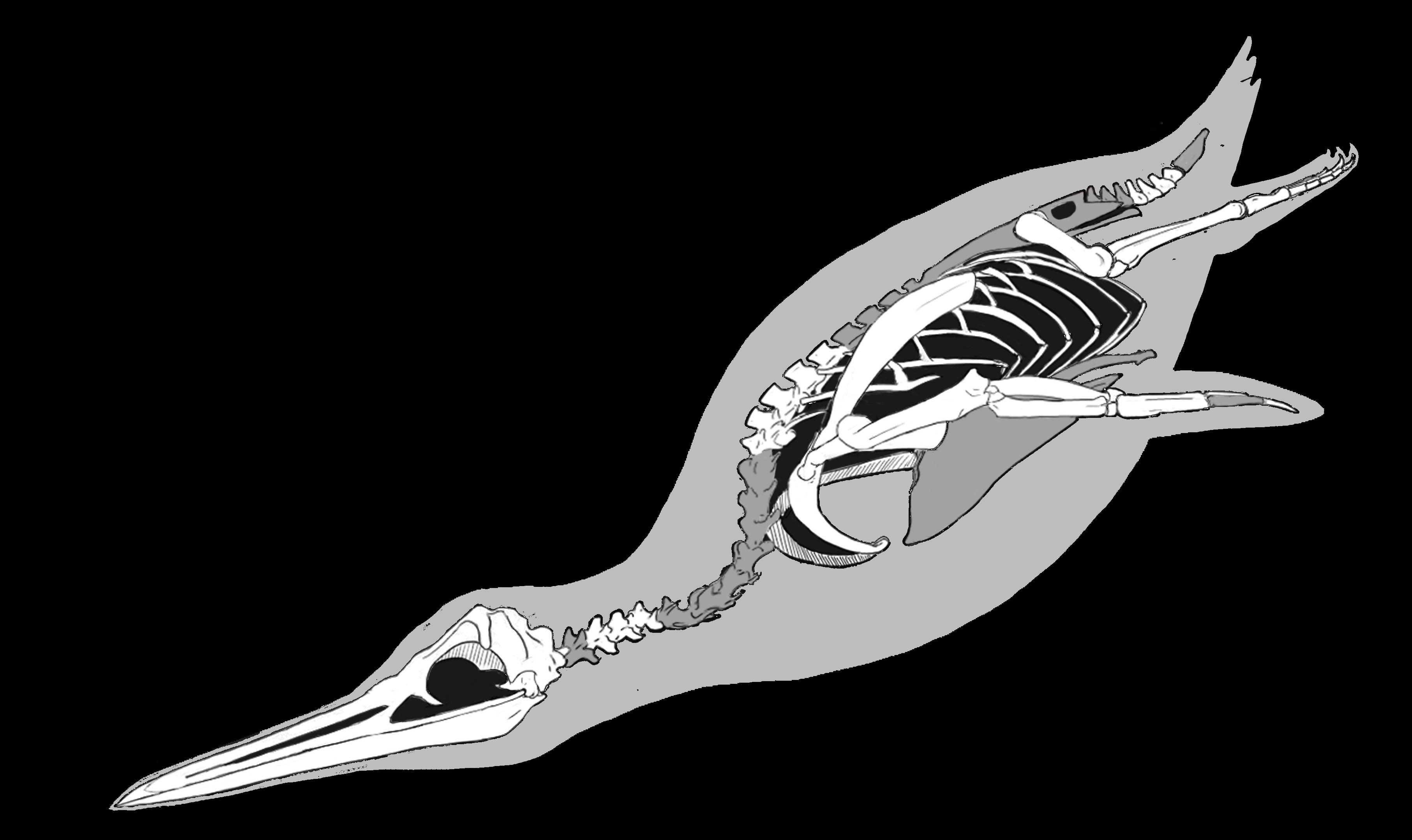 introducing inkayacu the first fossil penguin with feathers