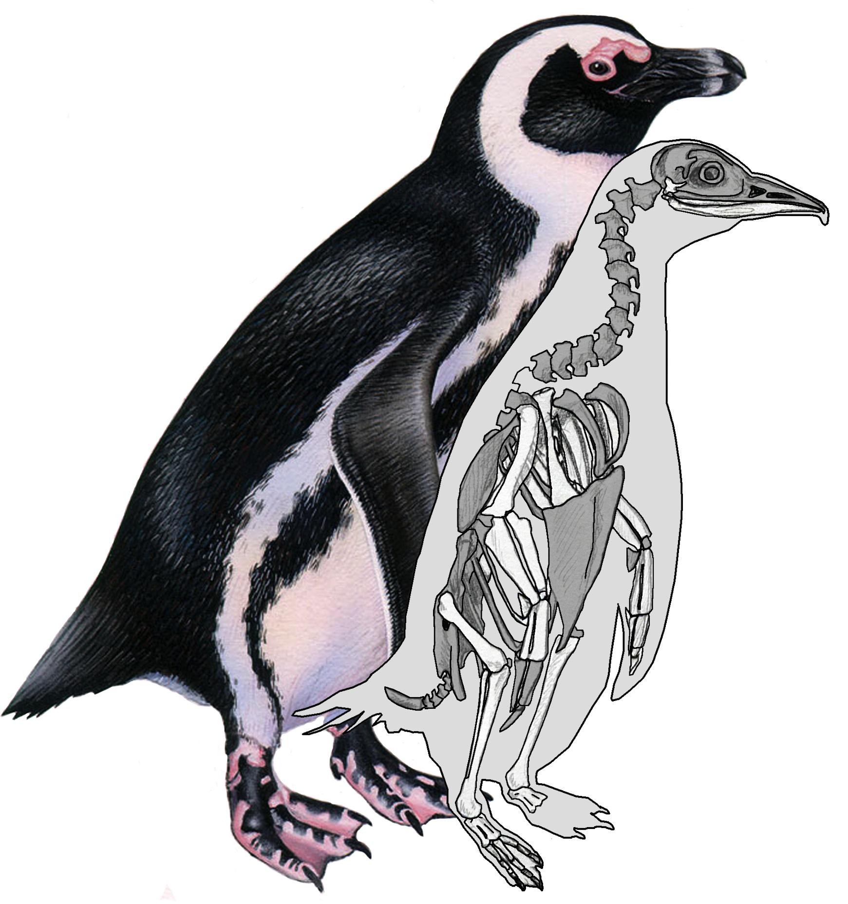 Kindergarten Penguin Diagram, Kindergarten, Free Engine Image For User ...