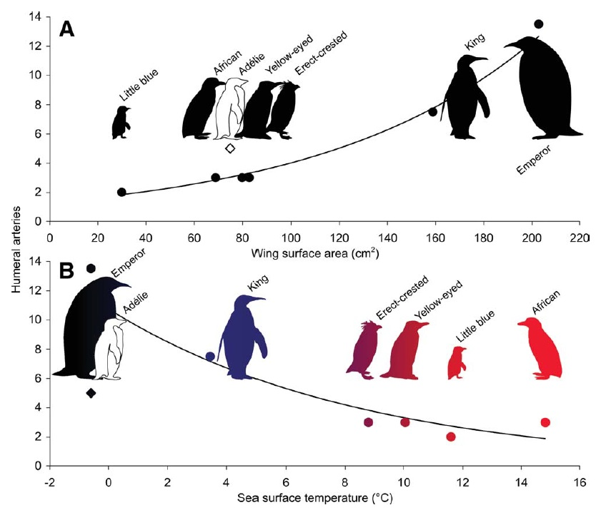 Evolution March Of The Fossil Penguins