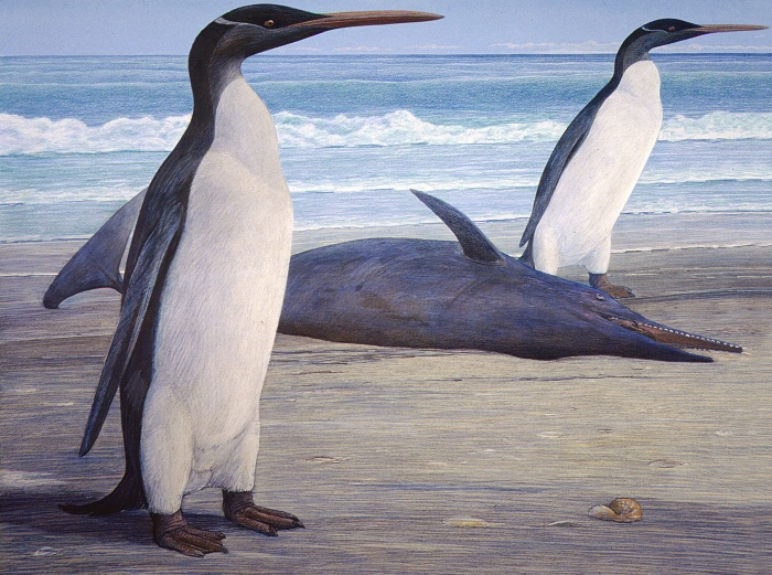 Two Kairuku penguins come ashore, passing a stranded Waipatia dolphin. Artwork by Chris Gaskin, owner and copyright owner: Geology Museum, University of Otago