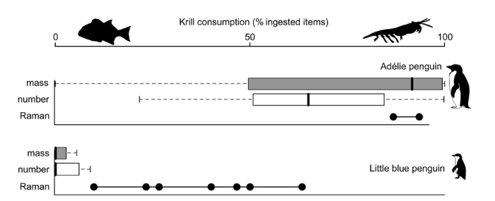 Effects of krill consumption on bone composition. The white and grey box plots show the amount of krill eaten relative to other food items, and the black circles show Raman values. Species that eat more krill show higher Raman values. From: Thomas et al. (2013).