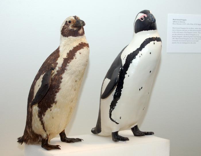 3D Penguin 2a.