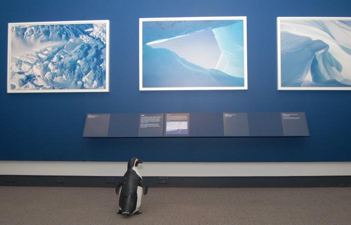 3D Penguin in Exhibition