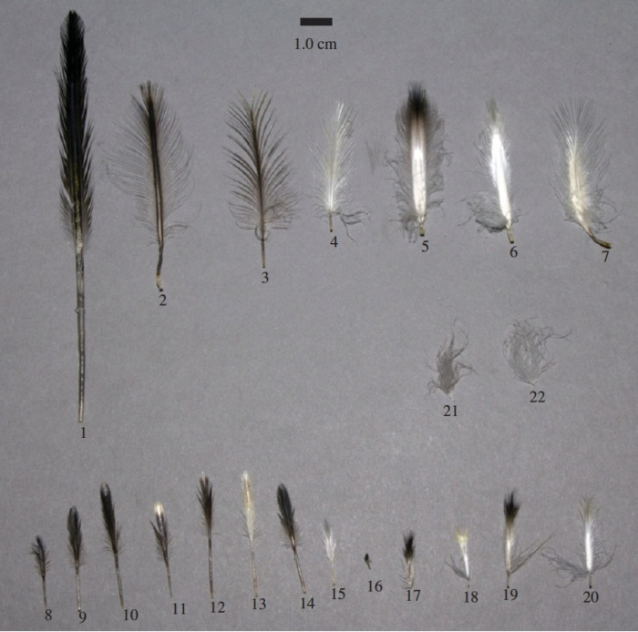 feathergam