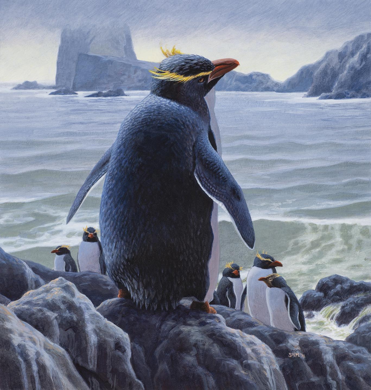 Murtha_Penguin sm